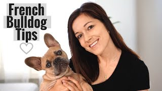 5 Tips for French Bulldog Owners