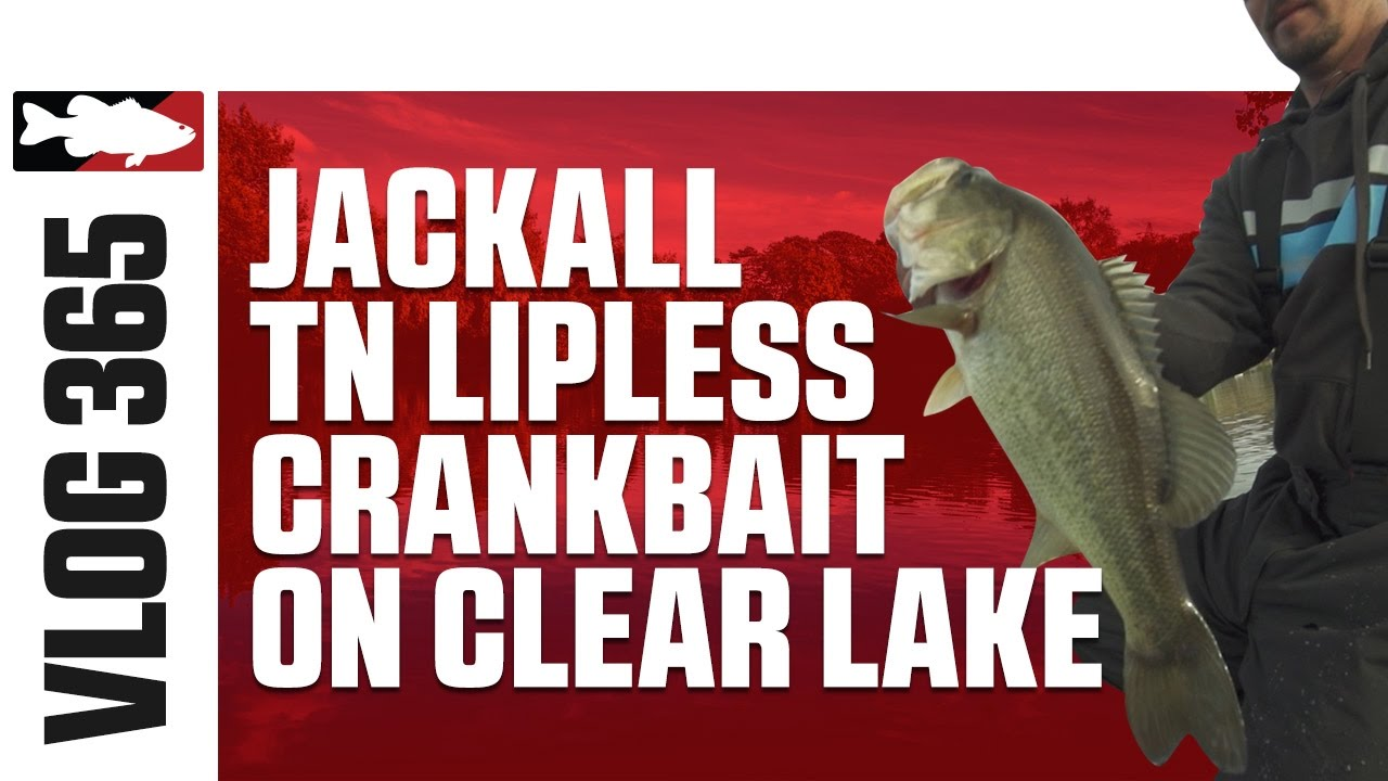 Jared Lintner & Alex Davis Fising the Jackall TN Lipless Crankbait on Clear Lake - TW VLOG #365