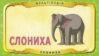Мультіпедія тварин. Слон (Уроки тітоньки Сови)