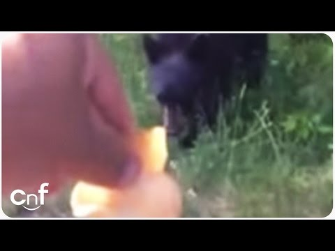Wild Bear Hand Fed by Chips | Wildlife Petting Zoo