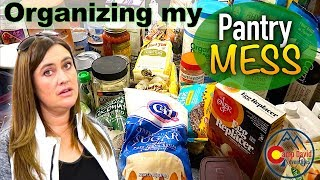 DOLLAR STORE PANTRY ORGANIZATION - EXTREME ORGANIZING - REORGANIZING ON A BUDGET - ORGANIZE WITH ME