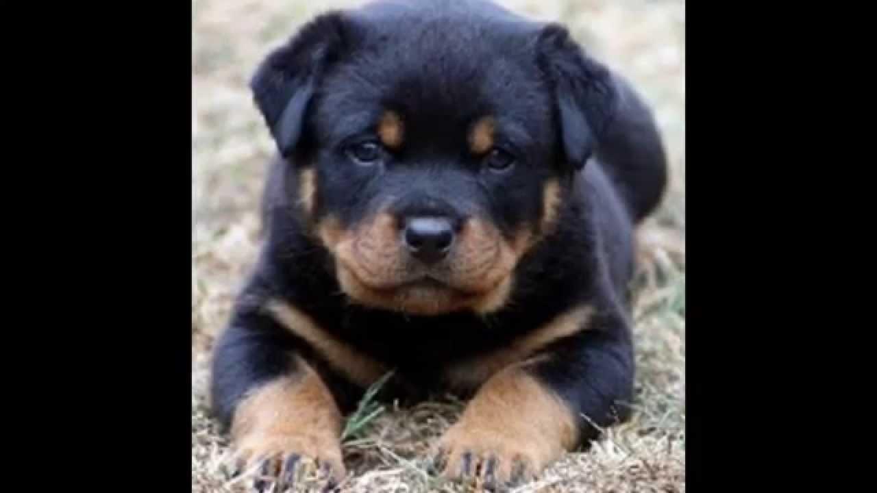Youtube Dog Breeding