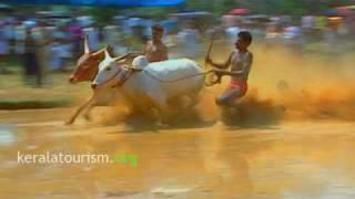 Maramadi - the bull surfing of Kerala