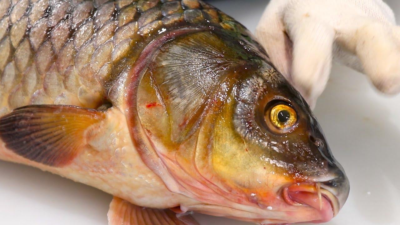 임금님만 드시던 귀한 황금눈 생선