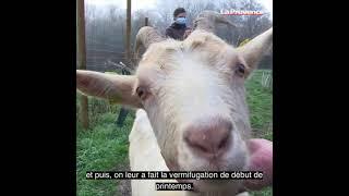 Viens je t'emmène, aux côtés d'une vétérinaire à domicile dans le sud Vaucluse