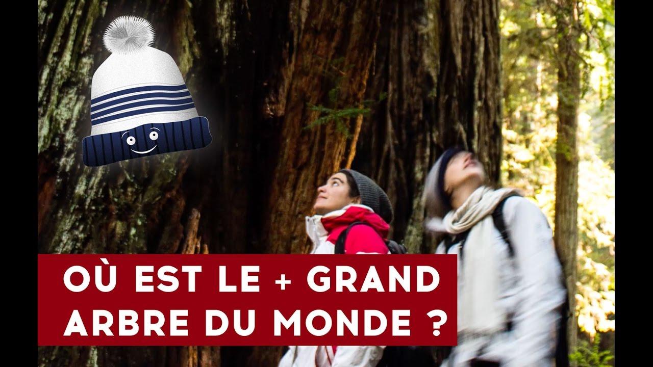 ???????? USA 09 : Où est le plus grand arbre du monde ? ????