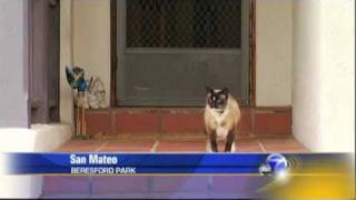 ABC News: Real Cat Burglar