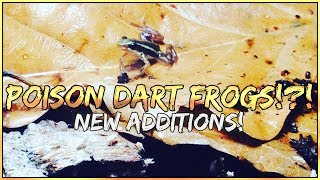 NEW ADDITIONS! POISON DART FROGS!