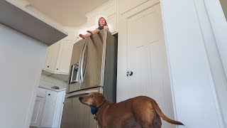 Ultimate Hide N Seek with DOGS!!