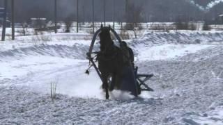 Бега кашофках (1 заезд)  Шушенское 2016 (Horse–Animal-racing-конь-смотреть-онлайн-скачка)