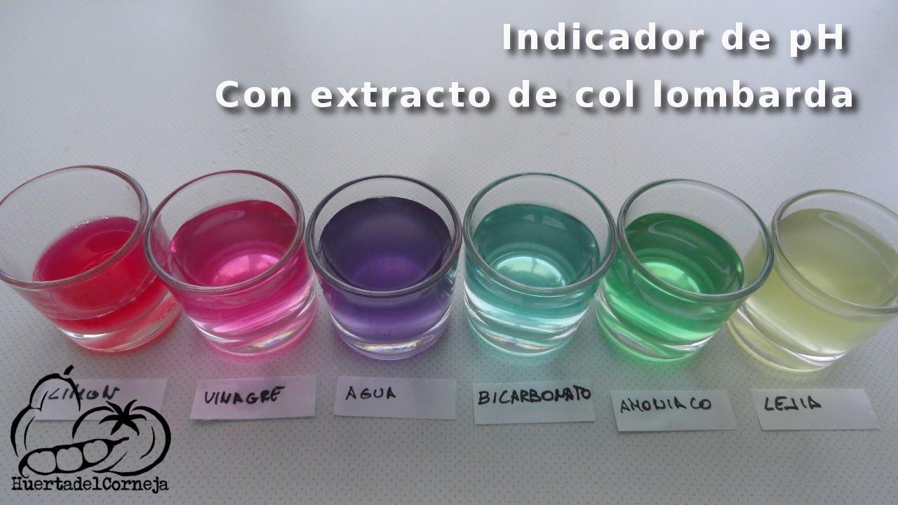 Como hacer un indicador de ph con el extracto de col for Como se cocina la col