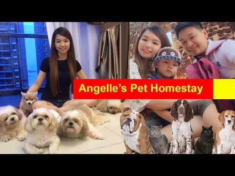 angelle's-pets-homestay,-boarding,-hotel,-home-visits,-taxi-#pethotel-#pettaxi