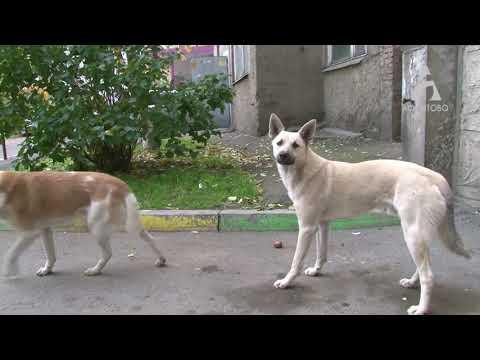 Стая бездомных собак напала на девочку в Солнечном в районе 115-ой школы