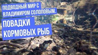 Подводный мир с Владимиром Солоповым Повадки кормовых рыб