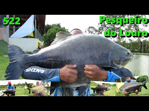 Louro - Pescaria complicada e peixes manhosos - Fishingtur na TV 522