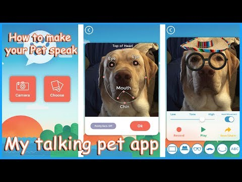 My talking Pet APP -Tutorial & Review - YouTube