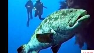 Mar Negro   pescan un pez desconocido