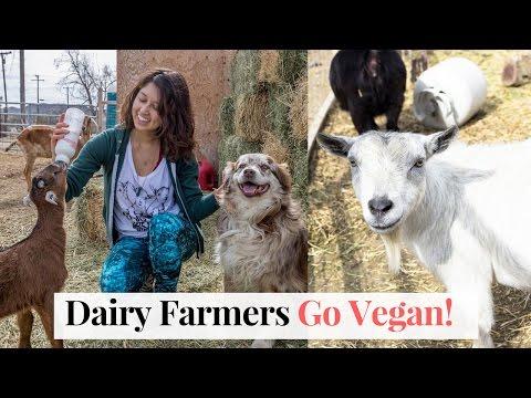 Goat Dairy Farmers Go Vegan! Sanctuary at Soledad 🐑🐷🐮❤️