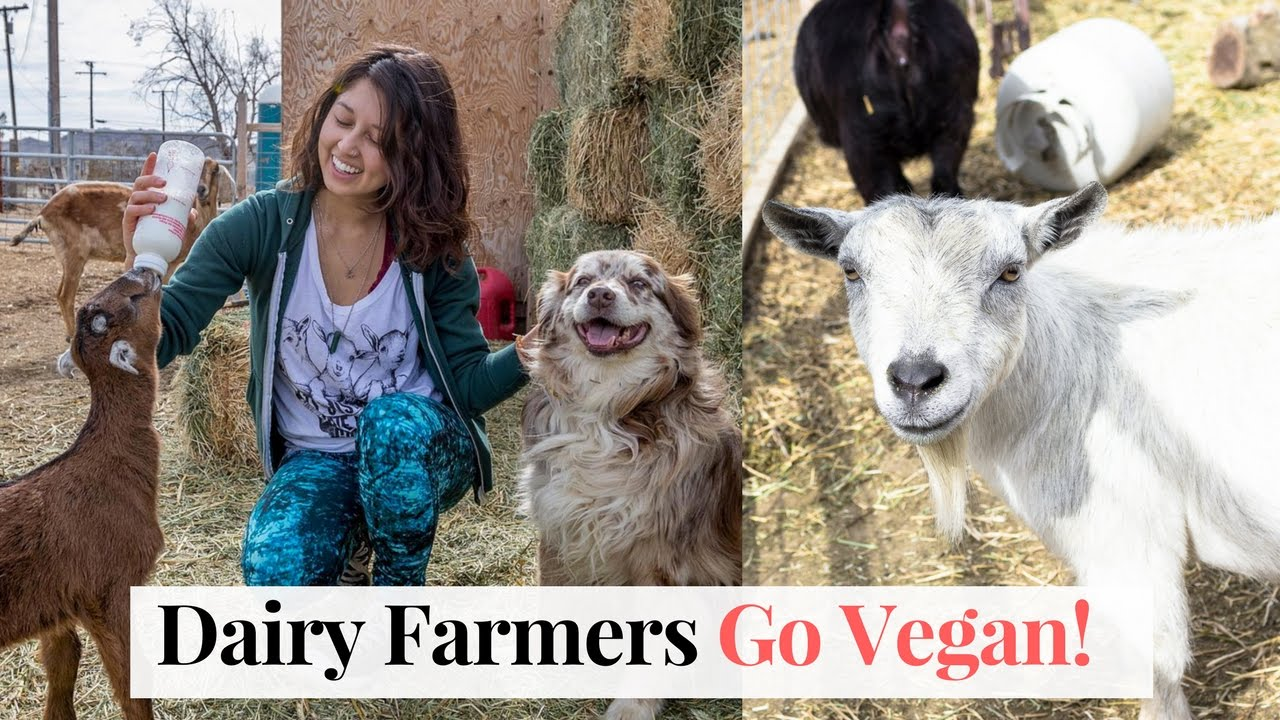 Goat Dairy Farmers Go Vegan! Sanctuary at Soledad