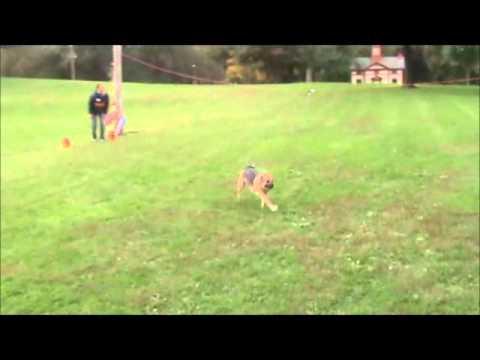 Mutt Mixer 2011 Doggy Dash Challenge