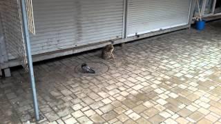 На Донбассе, даже коты с голубями дружат