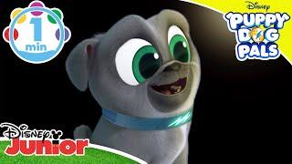 Puppy Dog Pals | Running Around 🏃♂️ | Disney Junior UK