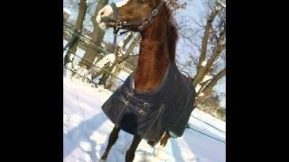 Virginia mein Pferd für alle Fälle & Sara Schaper