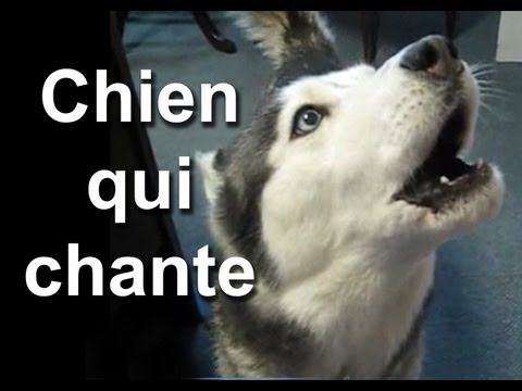 LE CHIEN QUI CHANTE - PAROLE DE CHIEN