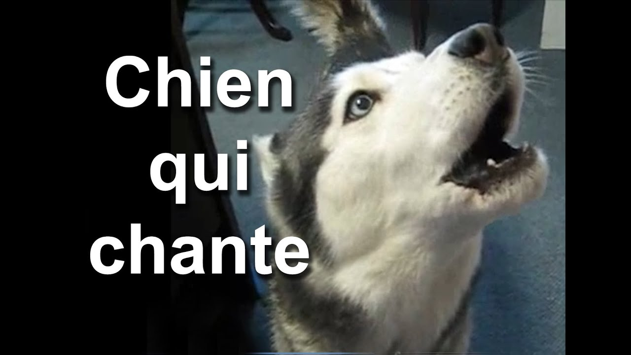 dith Piaf - Paroles de La Fille et le Chien - FR