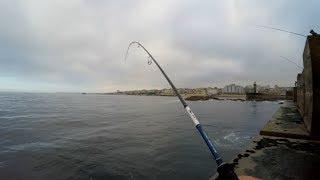 Competition: Natural bait VS artificial bait - 4K