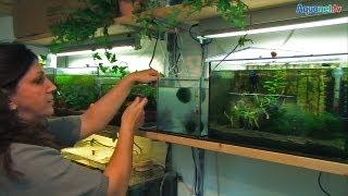Fisch- und Garnelenzucht statt Wohnzimmer bei Ines aus Oberbayern