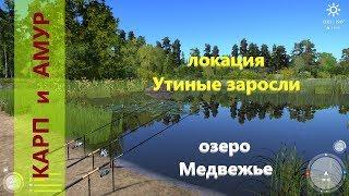 Русская рыбалка 4 - озеро Комариное - Карпы на месте