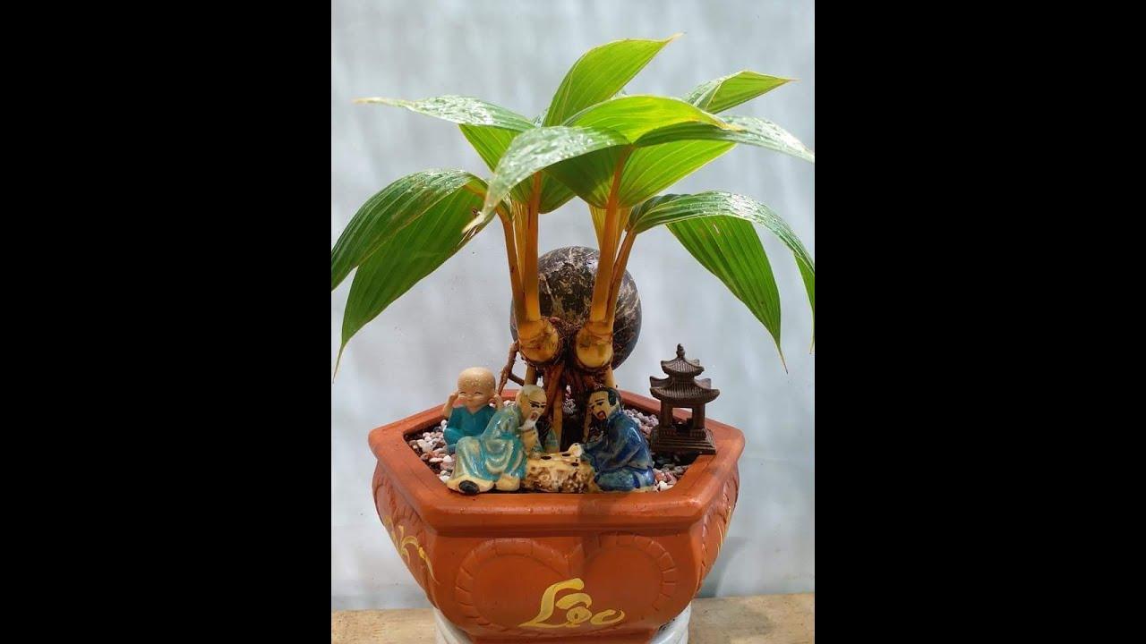 #DuaH2O/Công nghệ trồng dừa/H2O dua