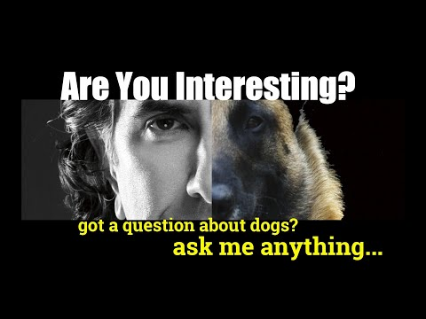 My Dog Either Ignores My Command or Takes His Time - Dog Training Video - ask me anything