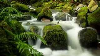 Portland, Oregon   Forest Park