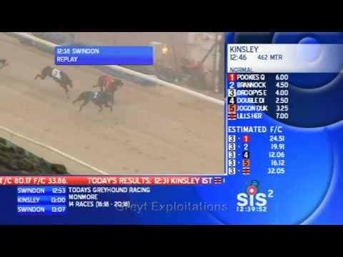 Greyhounds forced to race in thick fog!