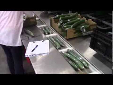 cucumber shrink wrapper machine