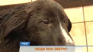 Зоозащитники: в муниципальном приюте Перми насиловали собак