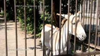 Харьков, зоопарк, парнокопытные, вольеры с оленем