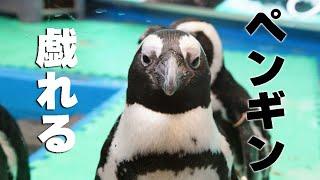 http://gigazine.net/news/20150308-penginbar/ ペンギンとお酒が飲める...