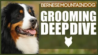 How To Groom Your BERNESE MOUNTAIN DOG