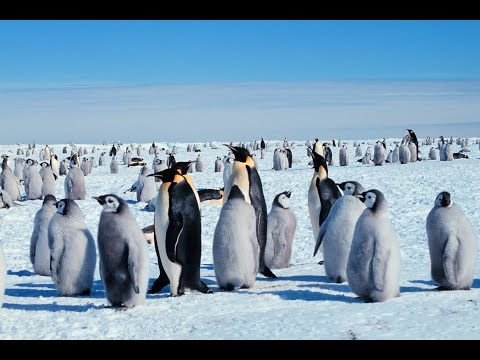 Top 10 animals that live in Antarctica