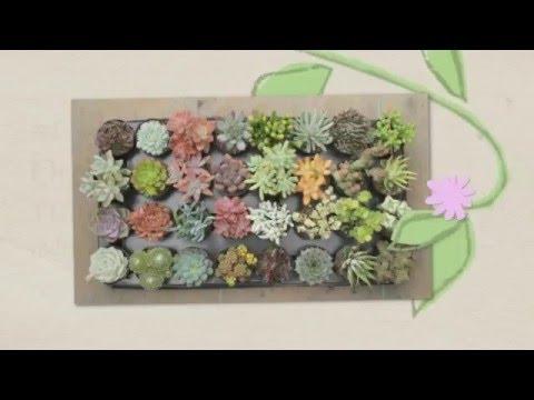 7 Most Prettiest Indoor Flowering Plants