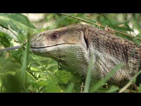 Телеканал Simon: Міжнародний день ящірок відзначили у Харкові