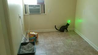Cat chases the green dot