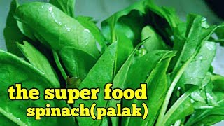 Benefits of spinach ( palak) for birds (in Hindi/ Urdu and English)