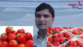 इजरायलबाट फर्किएका नेपाली जो स्ट्रबेरी बेचेरै मासिक २ लाख रुपैंयाँ  कमाउँछन् || Frontline Nepal