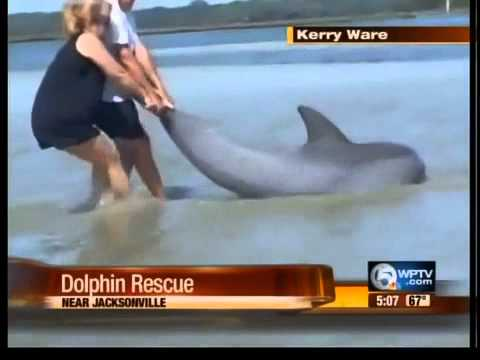 Dolphin rescue caught on tape near Jacksonville