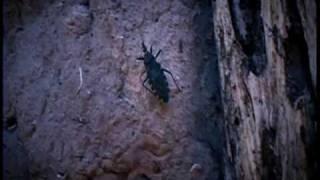 Chagas Un Mal de Todos -  PARTE I
