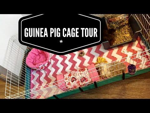Midwest Guinea Pig Habitat Cage Tour & Review